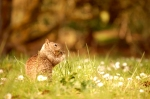 Squirrel in Oregon